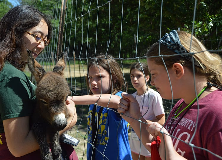 Field Trip - Kids learning about baby Miniature Donkey from Animal Specialist - Cub Creek Science and Animal Camp