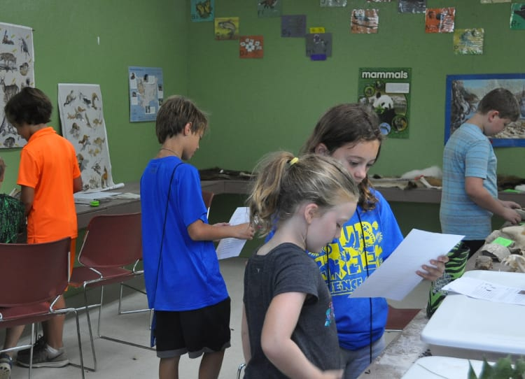 Field Trip - Kids learning in nature center - Cub Creek Science and Animal Camp