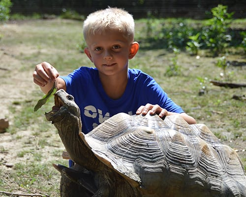 Free Time - Camper feeding African Spurred Tortoise - Cub Creek Science and Animal Camp