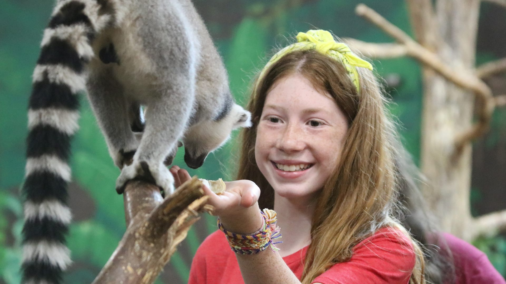 Home Page Image Carousel - Animal Camp - Camper interacting with Ringtail Lemurs - Cub Creek Science and Animal Camp