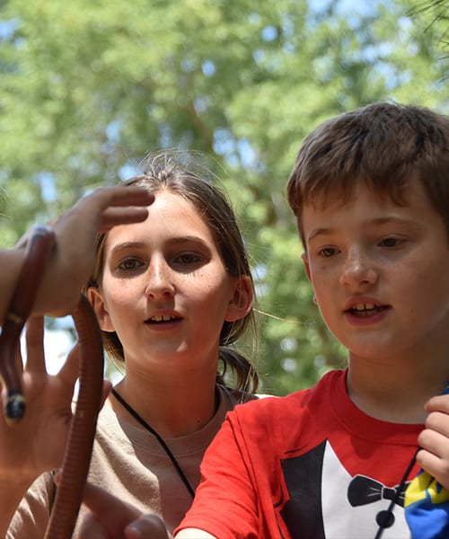 Parent Reminders- Campers play with Sinaloan Milksnake on check in - Cub Creek Science and Animal Camp
