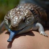 Reptiles & Amphibians - Cub Creek Science and Animal Camp