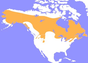 Canadian Lynx Map - Cub Creek Science Camp