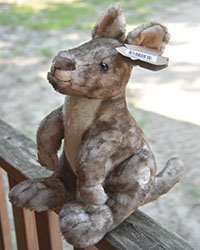 Wallaby Plush Toy - $15.00