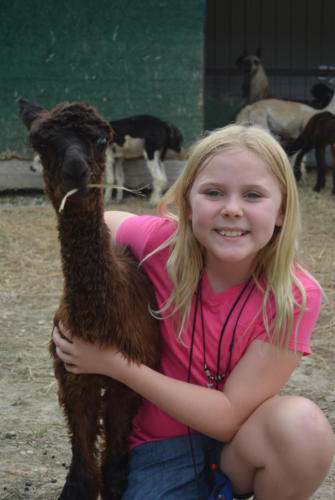 Baby Alpaca - Cub Creek Science Camp