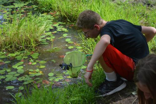 Pond Study - Cub Creek Science and Animal Camp
