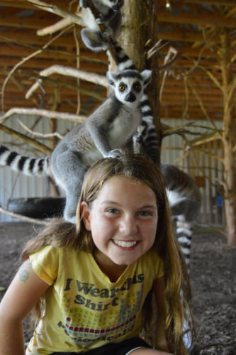 Ring tail Lemurs on camper - Cub Creek Science Camp