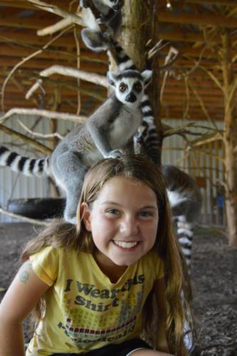 Ring tail Lemurs on camper - Cub Creek Science Camp