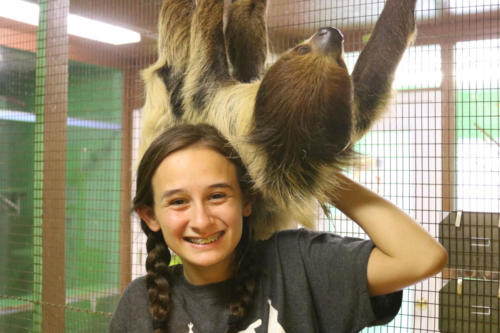 Two Toed Sloth - Cub Creek Science Camp