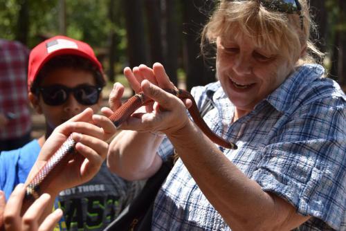 Sinaloan Milk Snake - Cub Creek Science and Animal Camp